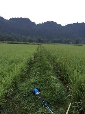 草刈り前 1