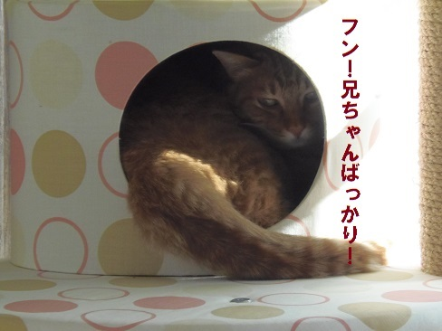 ぴっちりー3