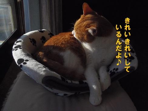 ぴっちり5