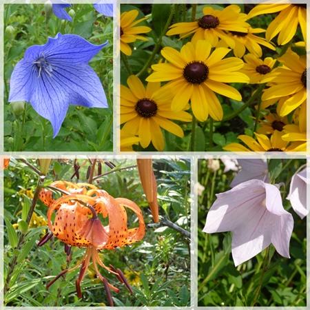 庭の花2015年8月1
