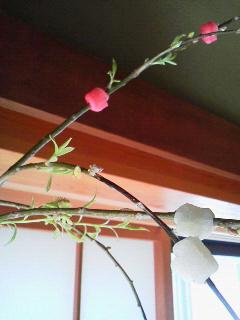 150302花餅芽吹き