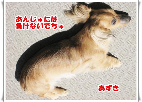 dc090717_20150808145233abd.jpg