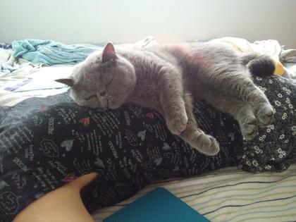 へいちゃんどこでお昼寝してるの?