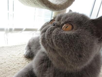 何見てるの?