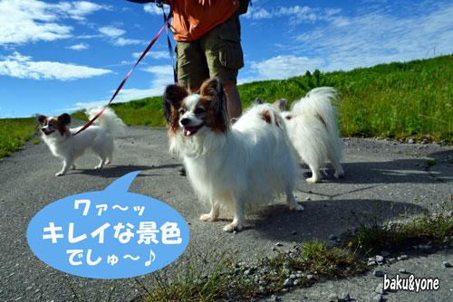 散歩_03