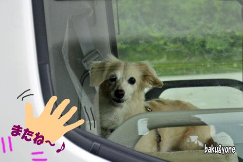 車の中のリンディちゃん