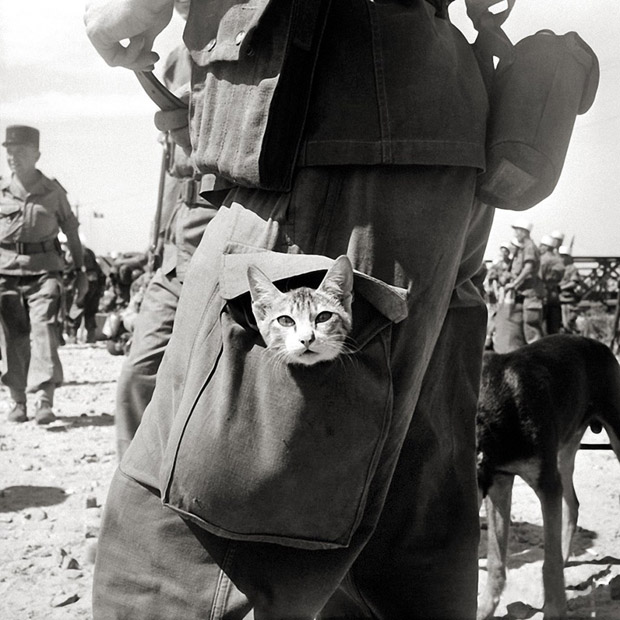 cats-at-war-indochina-1956.jpg