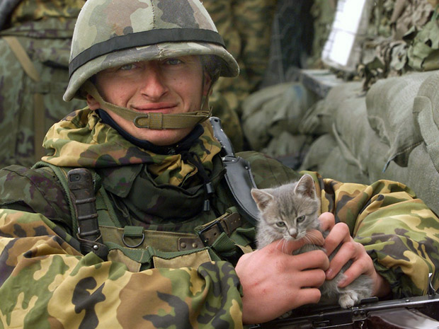 cats-at-war-kosovo-2001.jpg
