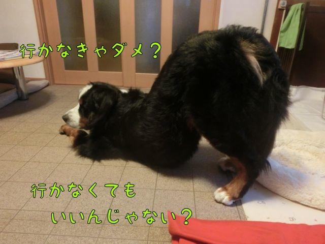 CIMG5206.jpg