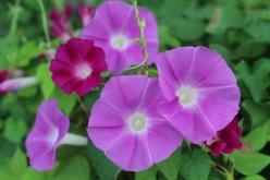flower-20150721.jpg
