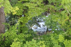 forest-20150712-00.jpg
