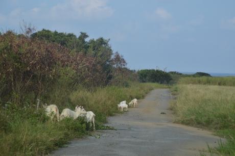 5山羊家族
