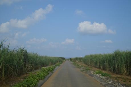 4爽快なサトウキビ畑