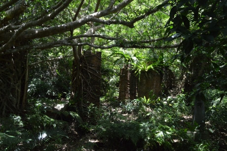 23木に侵食されたレンガ跡