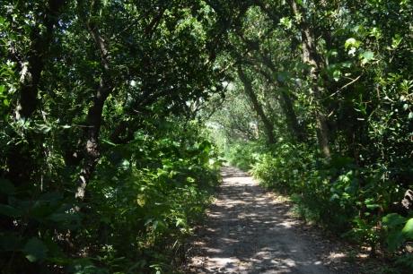 15森のような道