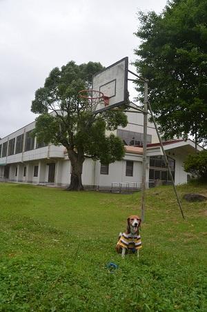 20150717総元小学校11