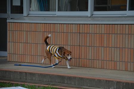 20150717総元小学校21