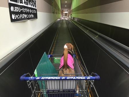 20150721びいすけと買い物05