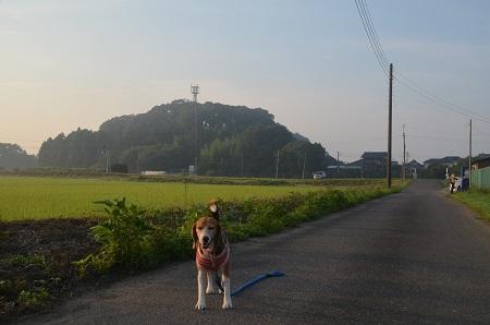 20150726印西朝散歩06