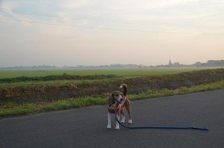 20150726印西朝散歩02