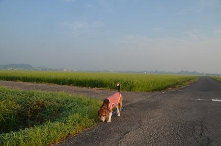 20150726印西朝散歩17