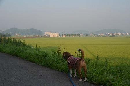 20150726印西朝散歩19