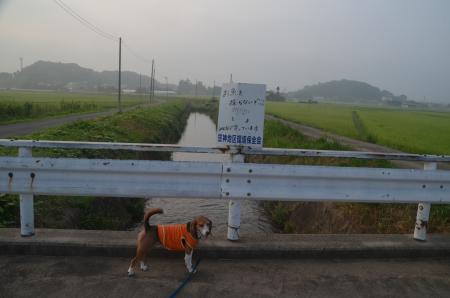 20150801印西朝散歩18