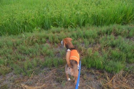20150801印西朝散歩24