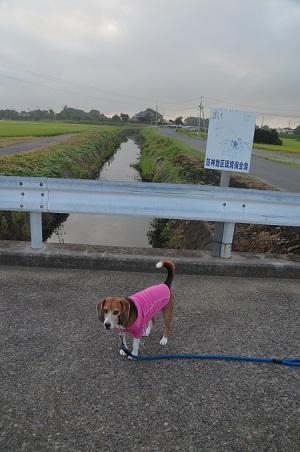 20150811印西朝散歩03