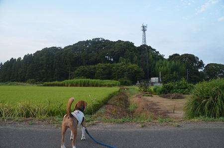 20150812印西朝散歩04
