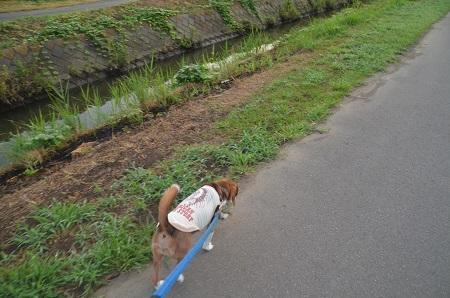 20150812印西朝散歩03