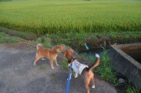 20150812印西朝散歩12