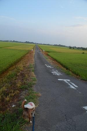 20150812印西朝散歩08