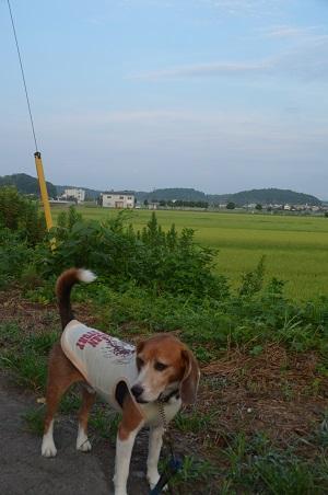 20150812印西朝散歩07
