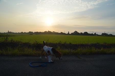 20150812印西朝散歩16