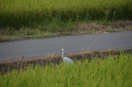 20150812印西朝散歩19