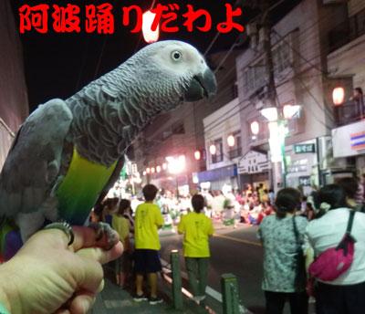 3_阿波踊り