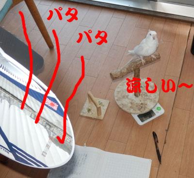 1_すずし