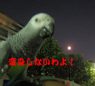 11_満月