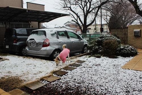 IMG_7753積雪