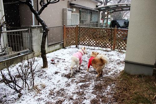 IMG_7766積雪