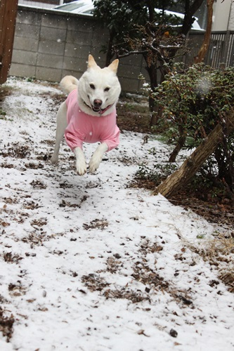 IMG_7764積雪