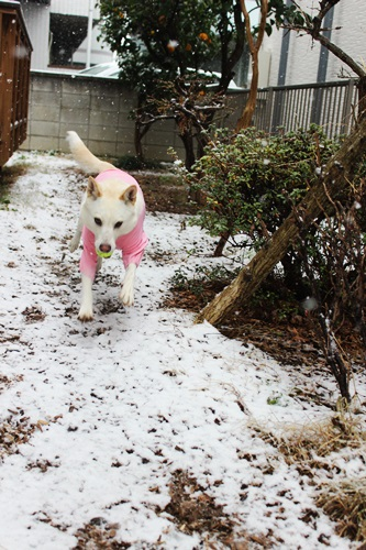 IMG_7760積雪