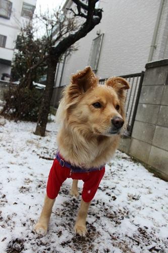IMG_7769積雪