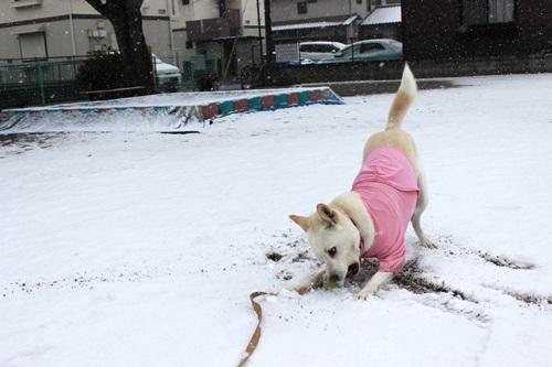 IMG_7771積雪
