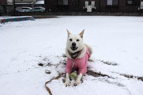 IMG_7773積雪