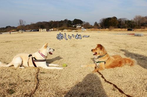 IMG_7924河川敷