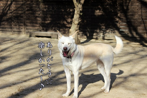 IMG_7995穂高