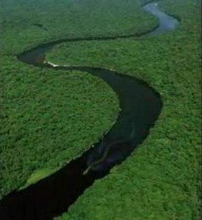 ボルネオの30メートル大蛇、ナブー