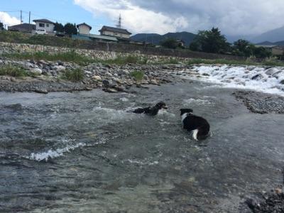 大武川にて2
